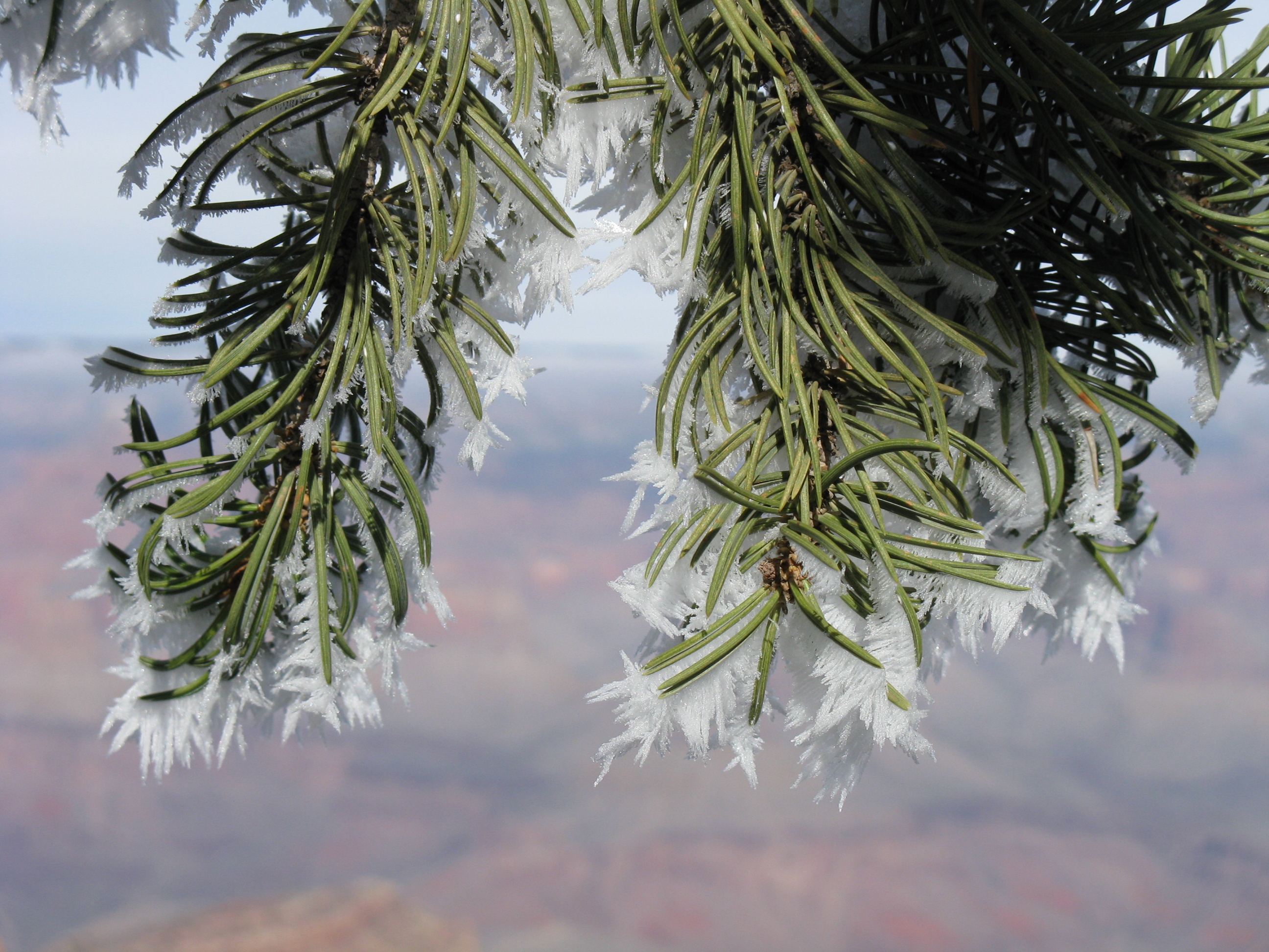 Cold Day – Grand Canyon, AZ