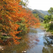 Autumn Color on Wolf Creek